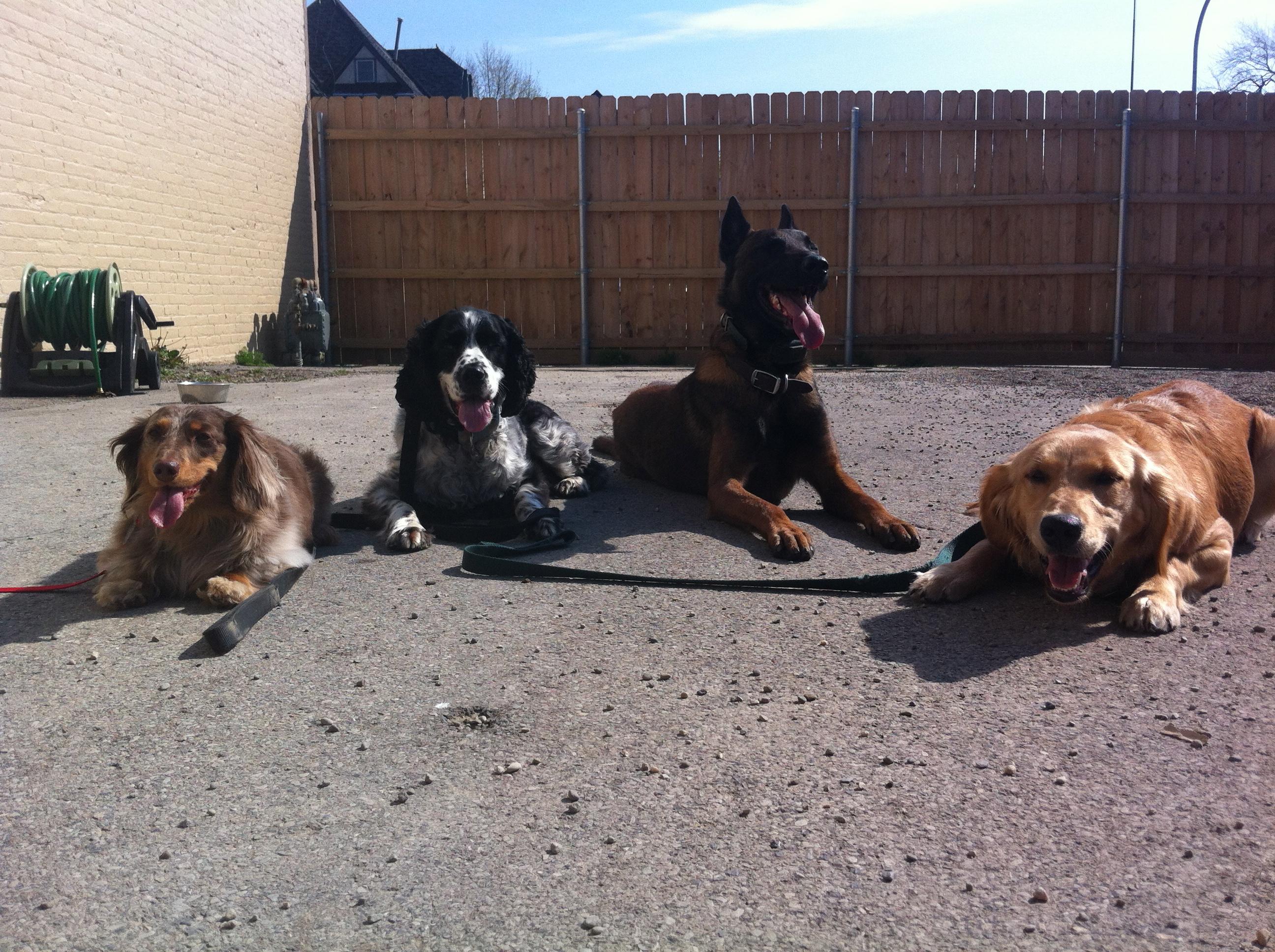 Dog Trainer And Grooming Buffalo Ny