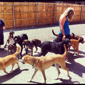 dog socialization program buffalo ny