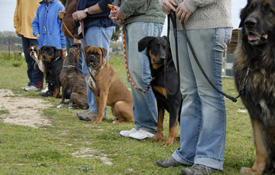 group dog training buffalo ny