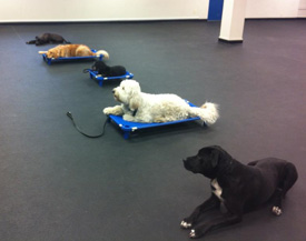 group dog training lessons buffalo ny