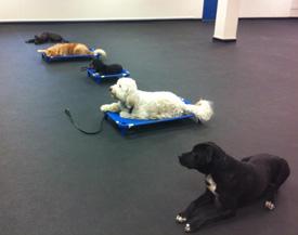 group dog training lessons buffalo ny