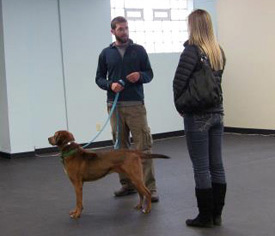 professional dog trainer buffalo ny