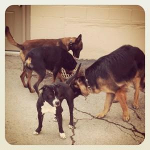 dog aggression, buffalo ny dog trainer, dog trainers in western NY