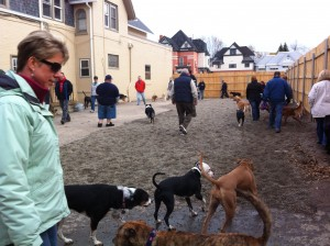 dog Socialization, pack, dog psychology