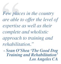 Buffalo, NY dog training