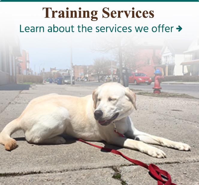 Dog Training Obedience And Behavior Modification Services Buffalo Ny